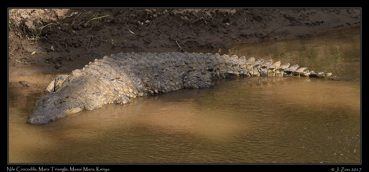 crocodile_4757a.jpg