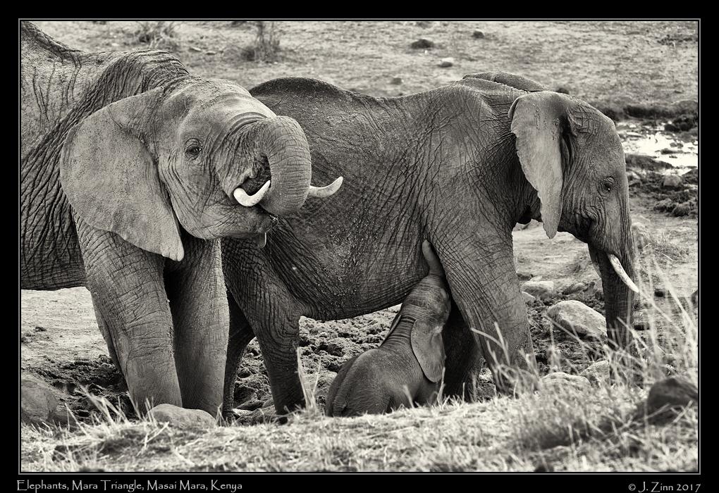 elephant_0762sfxa.jpg