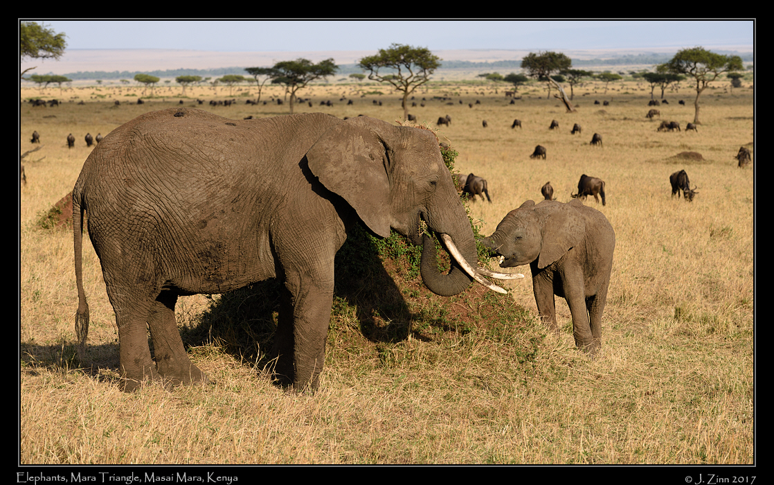 elephants_0793b.jpg