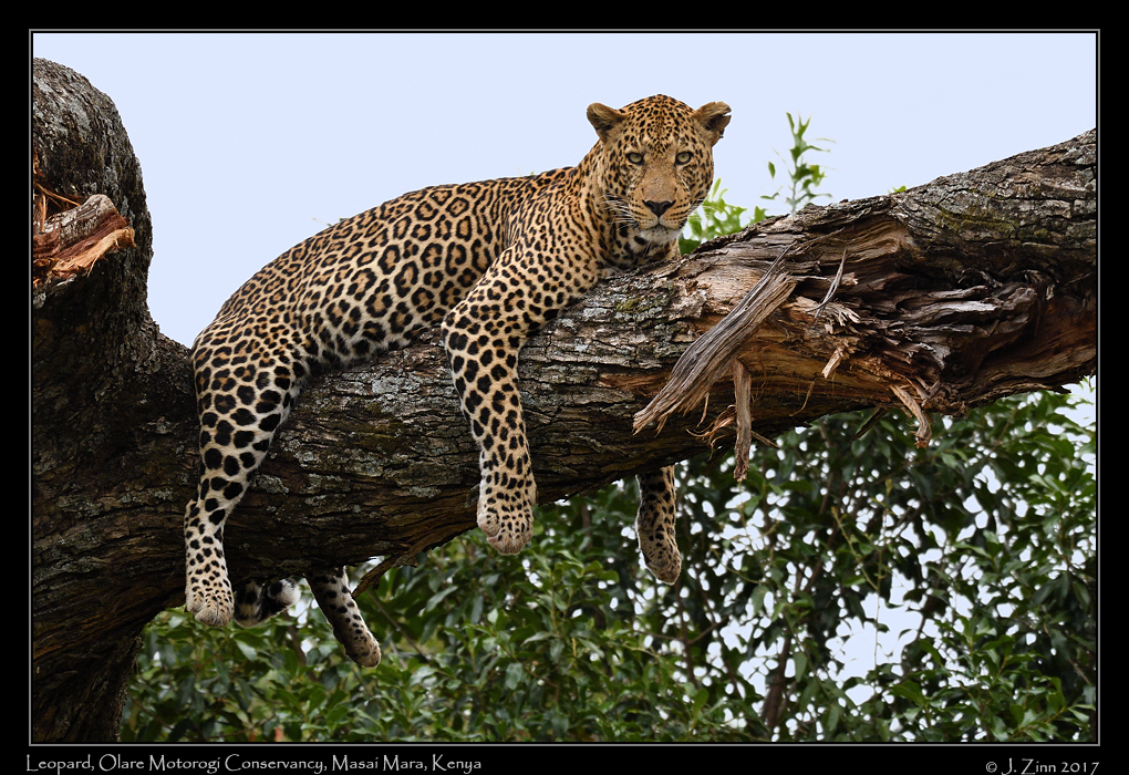 leopard_JZ5_7299a.jpg
