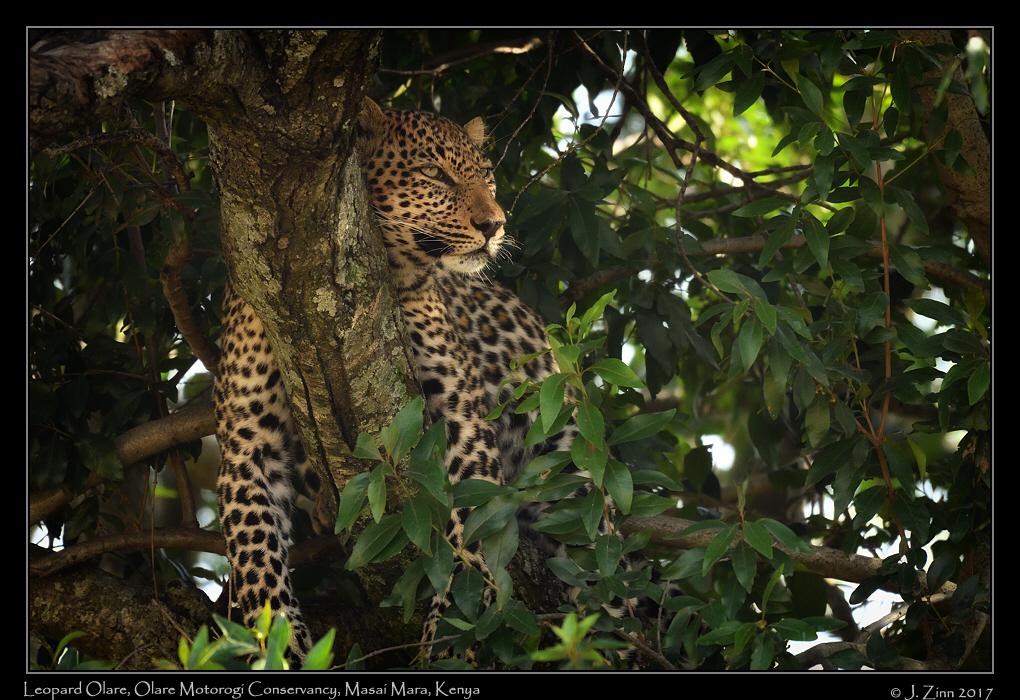 leopard_JZ5_8277a.jpg