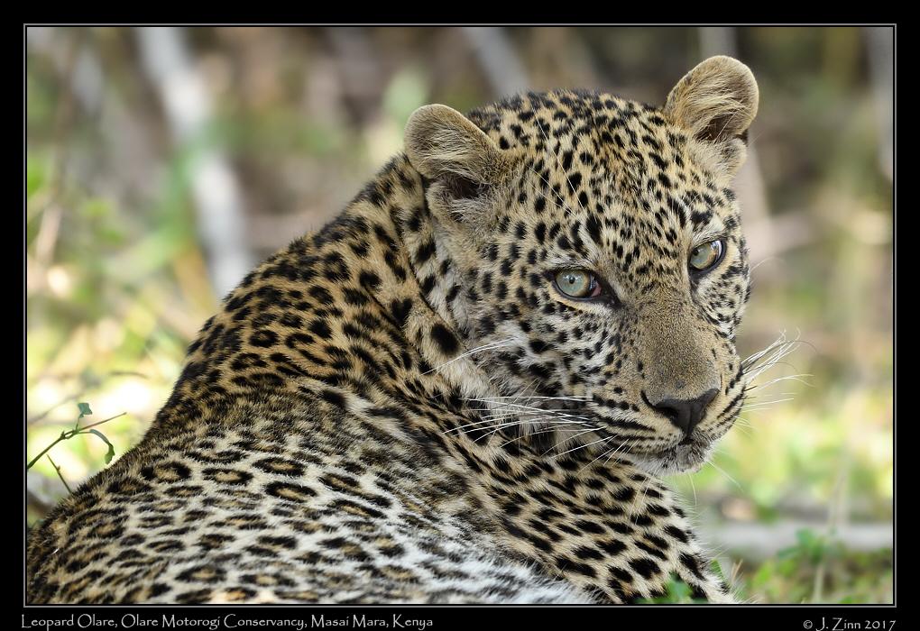 leopard_JZ5_9420a.jpg
