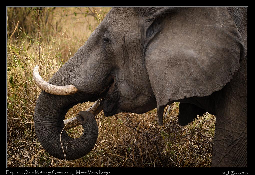 elephant_8753a.jpg