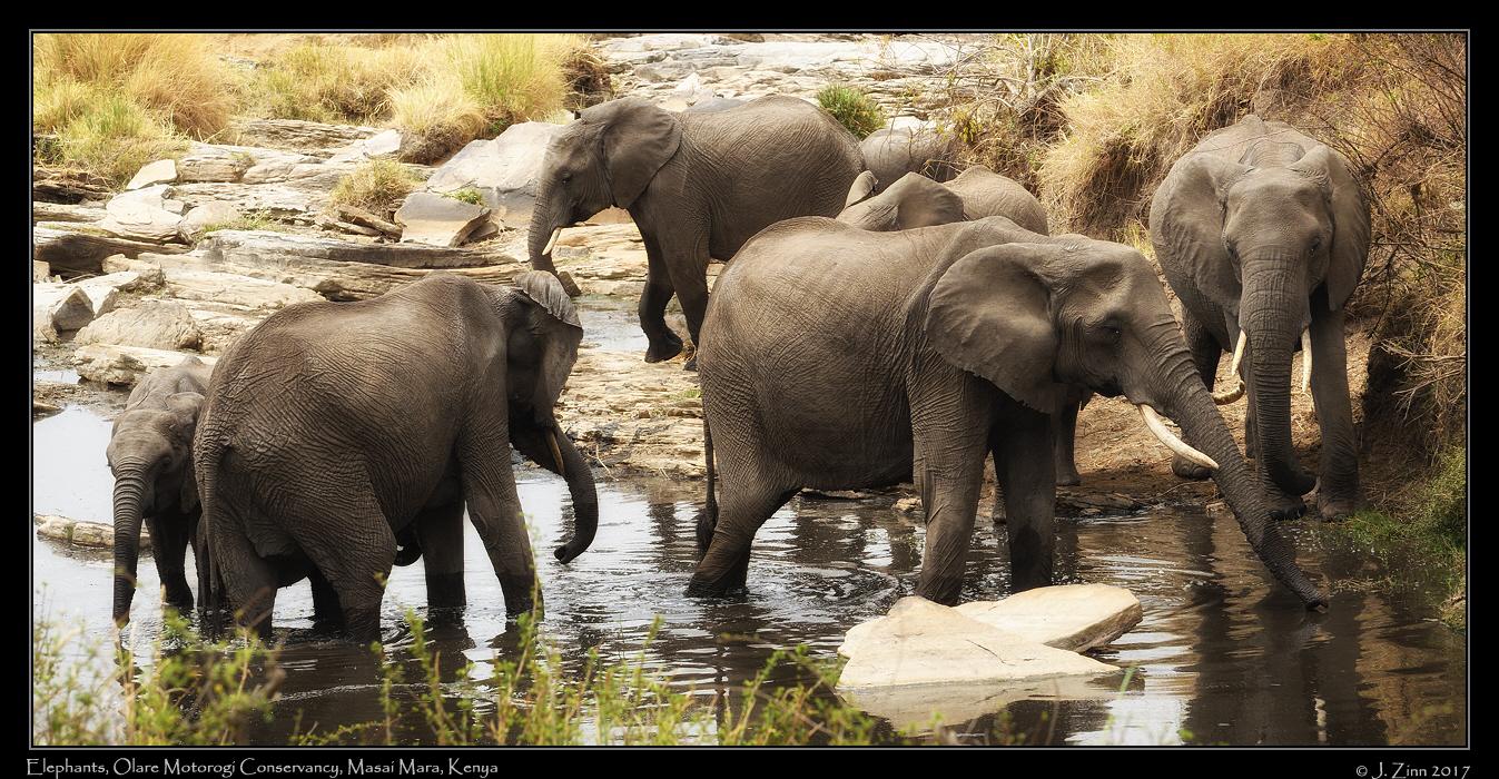elephants_8574a.jpg