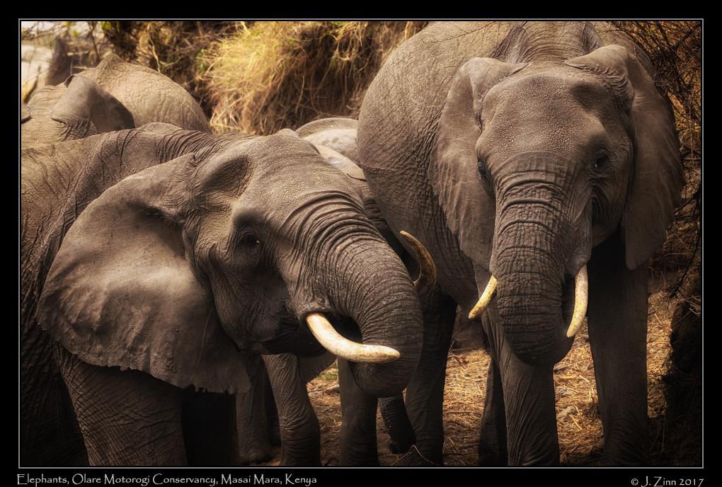 elephants_9693a.jpg