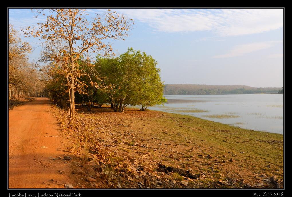 tadoba_lake_6599a.jpg