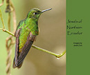 Jewels of Northern Ecuador