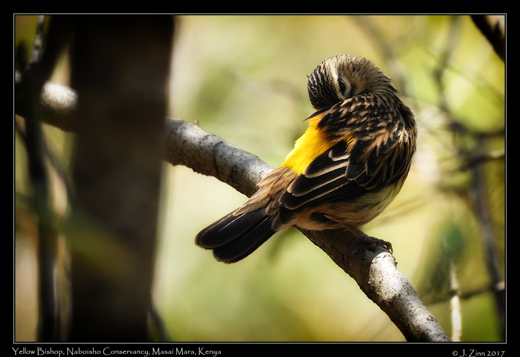 yellow_bishop_1807a.jpg